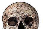 24: Bones